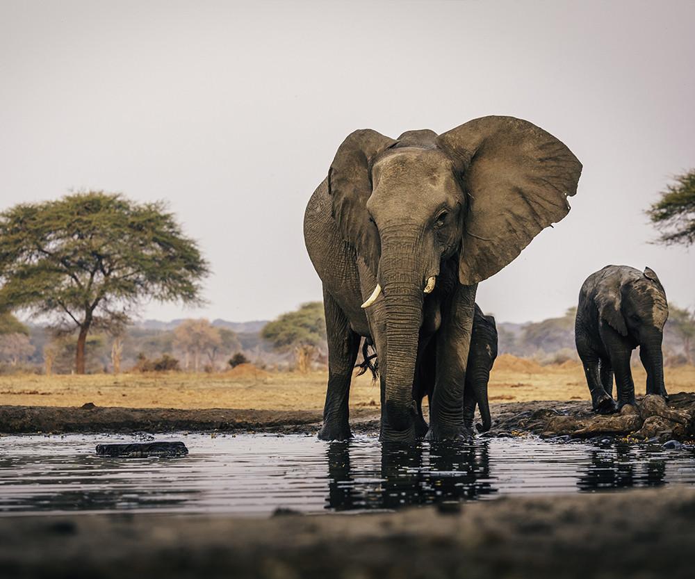 Le trafic d'espèces protégées reste très lucratif selon Interpol